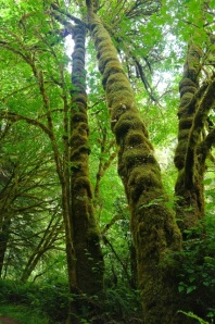 Mossy Trees_1